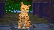 Красивый котенок из игры Симс 4