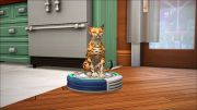 Смешной кот на пылесосе в игре Симс 4